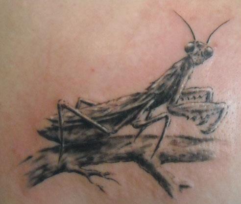 motyw pasikonika, tatuaż studia Drakkar
