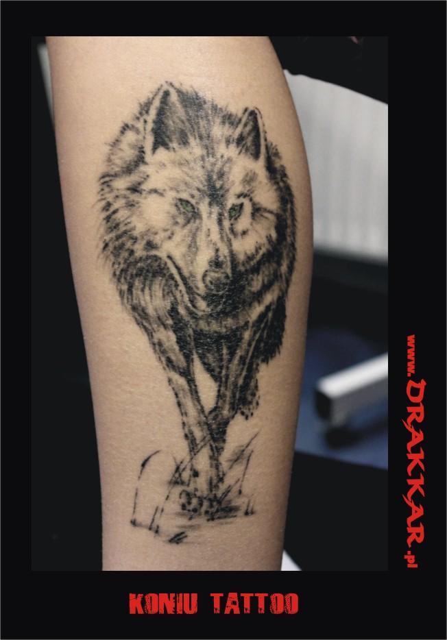 wilk, tatuaż - studio tatuażu Gliwice